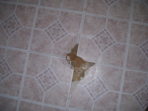photo of chewed floor tiles