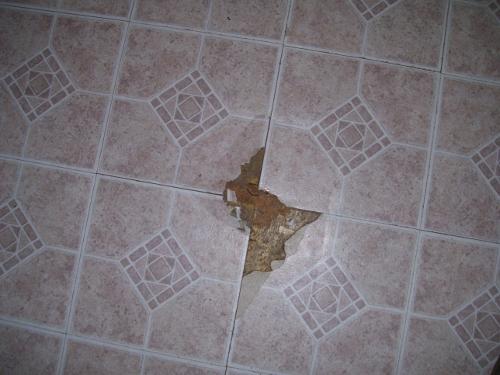 photo of chewed floor tiles